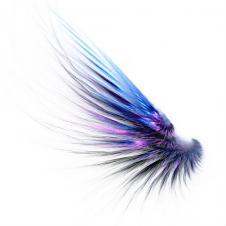 Fraktálový ptáček